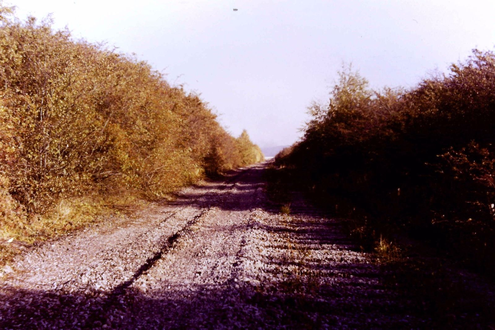 The trackbed after track lifting at Rickleton, Washington. Photo copyright Colin Alexander